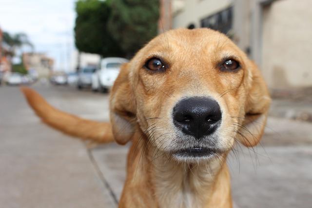 狗狗的肢體語言大解密!打哈欠的時候主人該要多多注意他了...