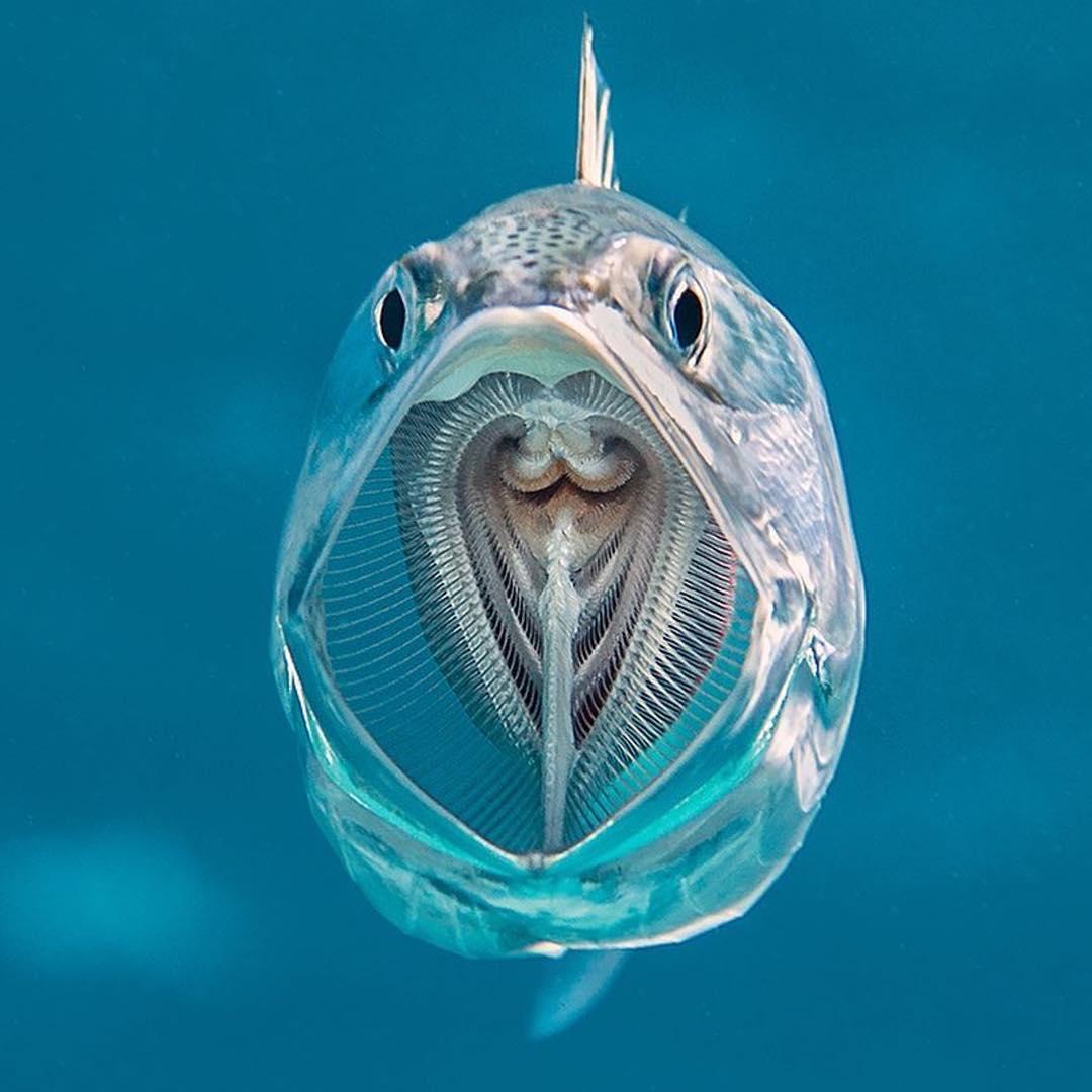 17張「連天使都會嫉妒攝影師」的超驚人照片 魚的嘴裡還有一隻魚!