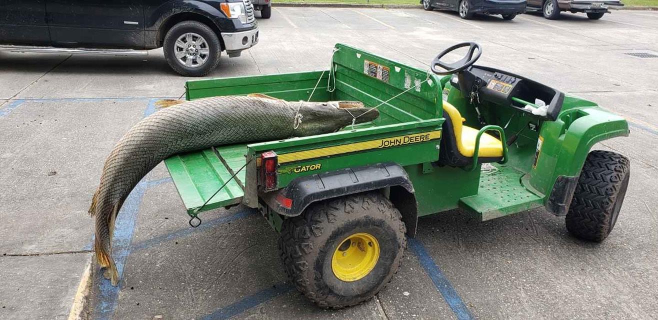 公園湖裡發出惡臭竟撈出史前「鱷魚頭魚尾怪」 超驚悚外型在地球已存在1億年!