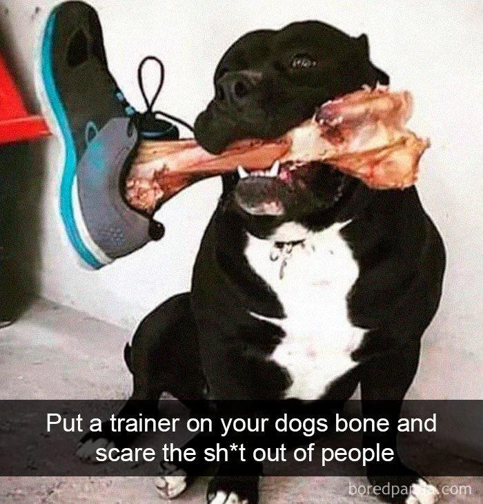 30張秒打敗你負面情緒的「最Q動物圖文」 餵狗狗骨頭時把鞋子掛在上面