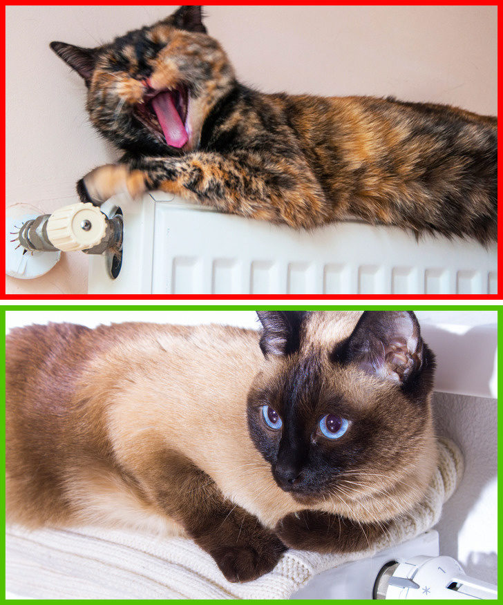 10個「資深奴才也會犯錯」的伺候貓皇小常識 把水放在飼料旁邊根本是害牠!