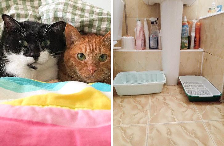 10個「資深奴才也可能犯錯」的伺候貓皇必知小常識 把水放在飼料旁邊根本是害牠!