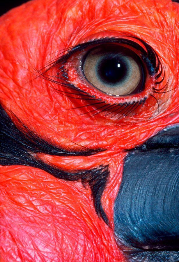 12種超級漂亮「但是80%的人都會猜錯」的動物眼睛