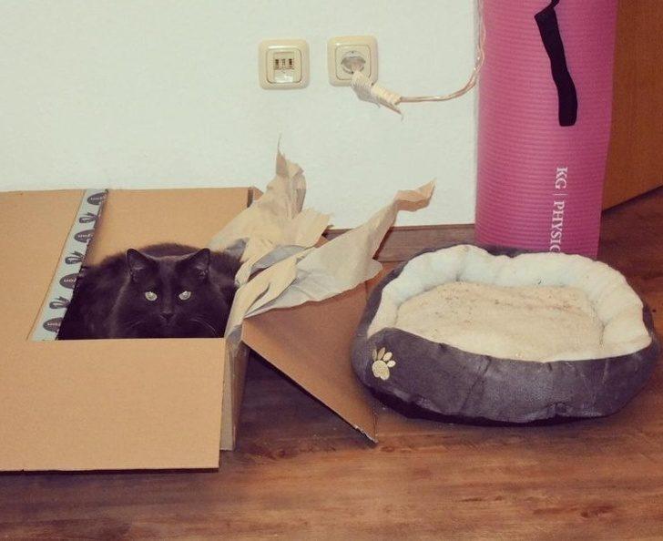 21個「牠這到底是不是愛我的表現」的超M貓奴日常 用了8年的椅子貓皇才來3天...