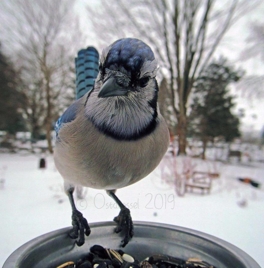 她在院子偷設置「鳥兒偷拍館」 一天拍下7000張最自由真實的美好畫面
