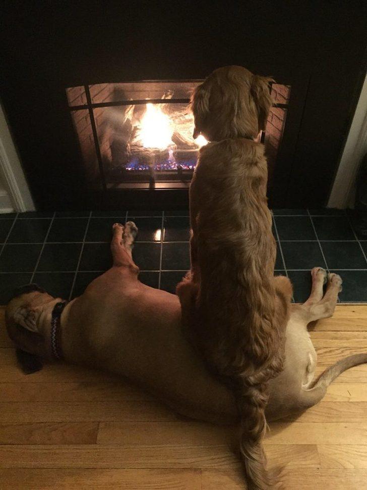 21個證明「狗狗也是外星人」的詭異個性 牠堅持只坐在「另一隻狗的頭上」