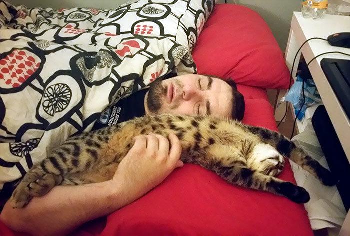 30張嘴上說不愛貓「但身體卻超誠實被收服」的嘴硬貓奴照