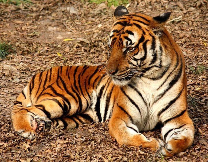 20隻「你差點就沒機會親眼看到」的超珍貴動物 真實的黑豹出現了!
