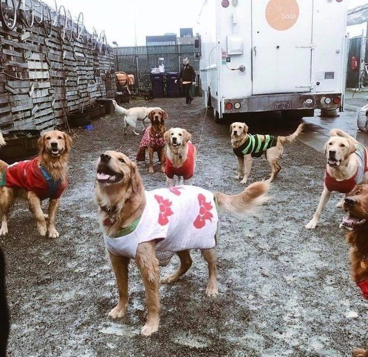 20張證明「愛能阻止世界末日」的可愛動物暖照 愛上了鴨子的狗狗!