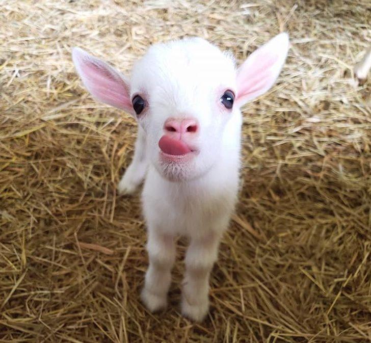 20張證明「小動物絕對是老天爺的禮物」的萌度破表照片 河豚的微笑超可愛❤
