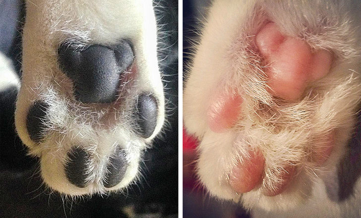 17個「連維基百科都不會告訴你」的超驚人事實 貓掌倒過來看是一隻泰迪熊!