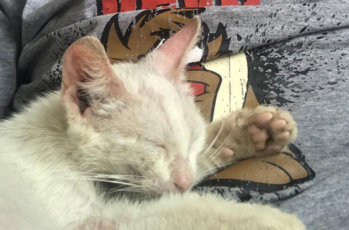 帥哥睡覺時「被貓咪收養」!醒來才發現回不去了...網暴動:你被選中了❤