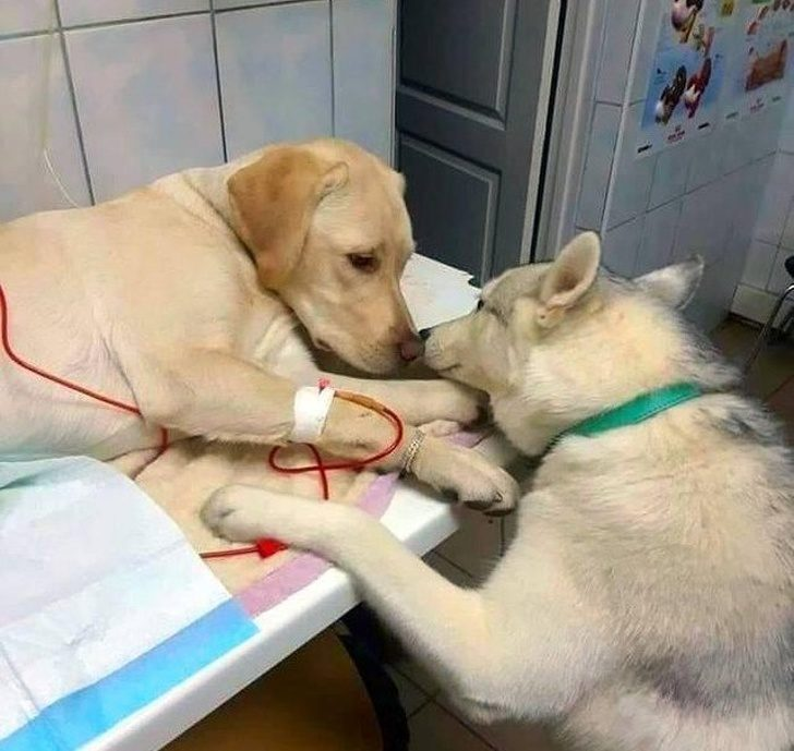 23張「會偷偷搖動你的心臟」的正能量暖心照 台灣「暖男狗狗」讓老外畢生難忘!