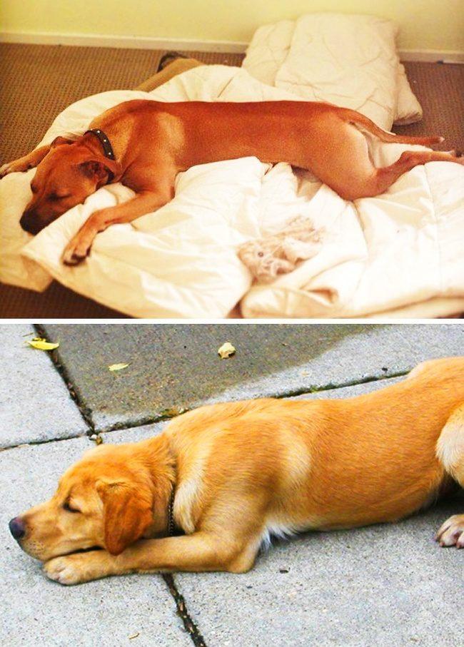 6個狗狗睡姿背後的真正意義 如果看到流浪狗「雪球式睡覺」就要很小心