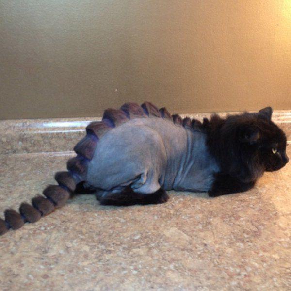 20張讓奴才瘋狂的「把貓咪進化成恐龍」造型照!三色貓「三種顏色的角」把網友萌翻