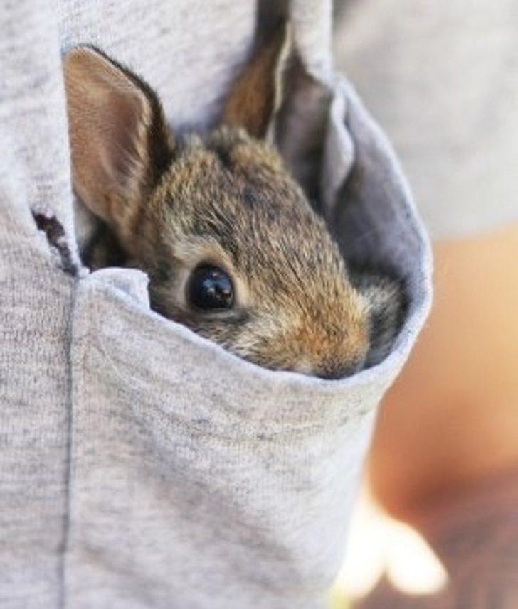 29隻「萌到紅蘿蔔都跪求吃我」的超可愛迷你侏儒兔 一手掌握的「口袋型小兔兔」!