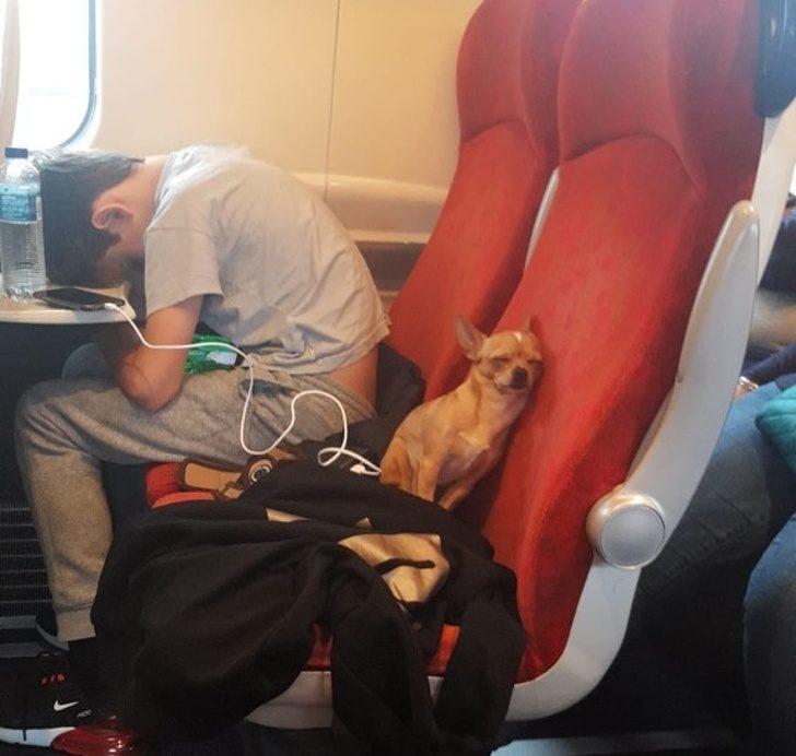 22張讓你想「衝回家抱緊毛孩」的暖心照 傲驕爸幫狗狗穿上兒時洋裝!