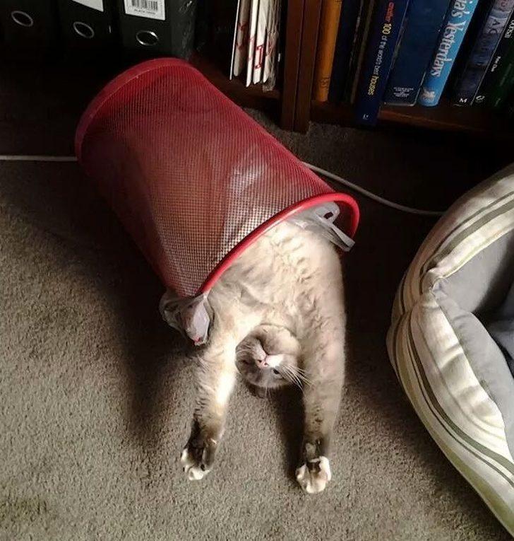 20隻睡到變成「炸蝦天婦羅」的液態喵星人 用腳把自己整個蓋住!
