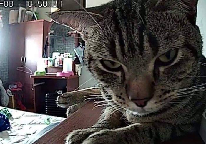 晚上設監視器看「貓咪會做什麼」 結果畫面太驚人網笑翻:牠真的很愛你