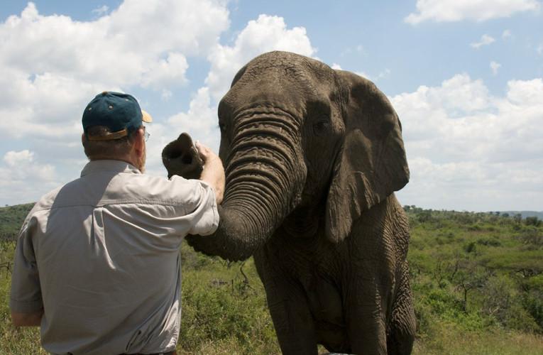 南非21頭大象「心靈感應」突然跋涉12小時 列隊「仰鼻哀鳴」 思念最至親的朋友