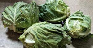 凌晨3點起床種高麗菜「1顆賣10元」 老人團變「貪心蝗蟲」超惡劣砍價:拿5顆只丟30!