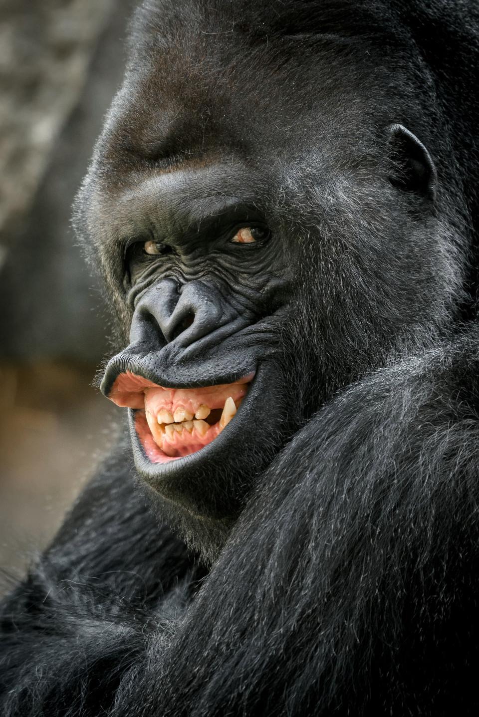13隻「出生就註定當明星」的賣弄性感動物 牠胖成「獨角獸」嘴唇還是超迷人!