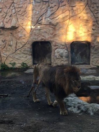動物園倒閉把所有動物「留在原地等死」 動保人3個月後抵達痛哭:萬獸之王只剩皮包肉...