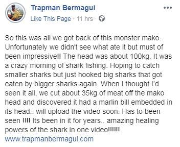 《巨齒鯊》真的重出江湖?被一口啃掉半身的屍骸看出「巨型不明生物」比電影裡的恐怖