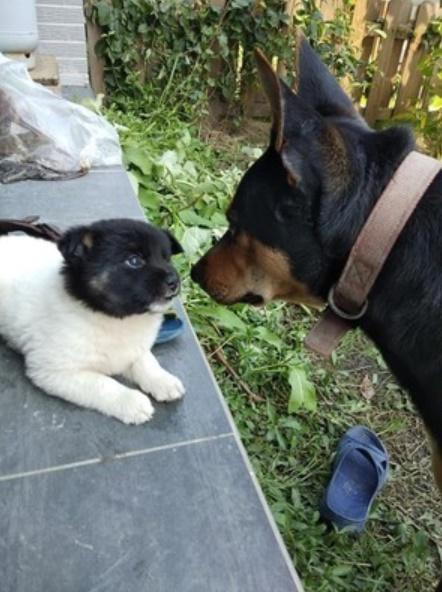 狗媽「顏料帶不夠」染到一半就出貨 超可愛「黑頭白身汪」萌壞網友:要叫小黑還是小白?