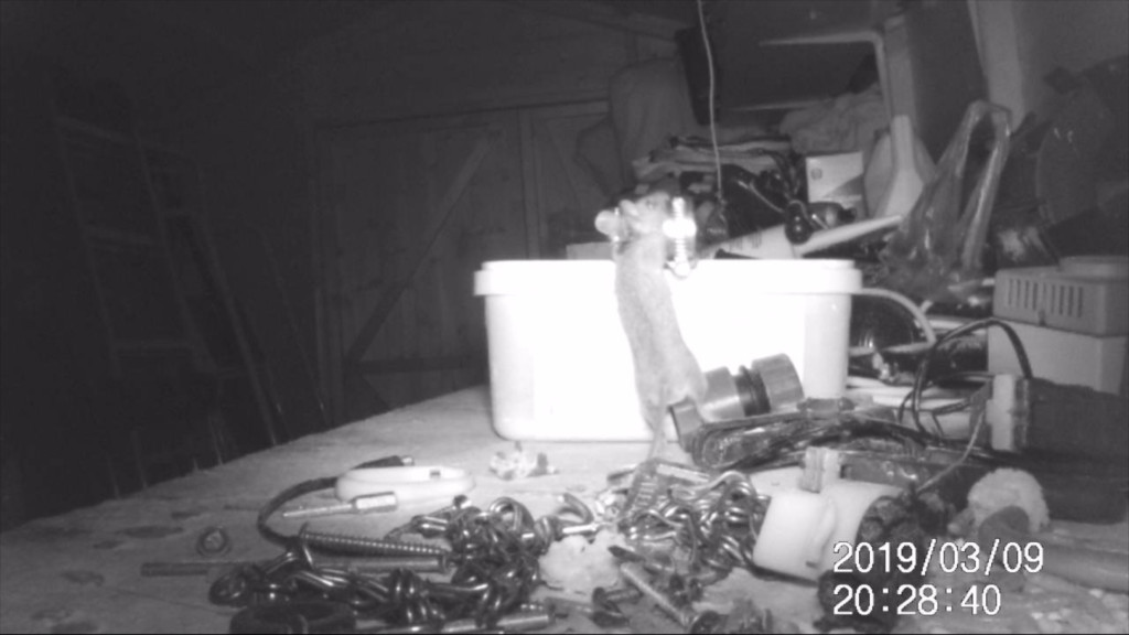 影╱倉庫髒亂但早上起來一定整理乾淨 偷設攝影機拍到「強迫症小精靈」:跨丟鬼!