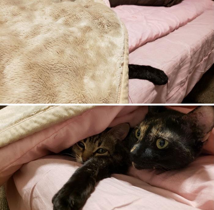 30張證明「繼續選飯店你會失去太多」的民宿專屬驚喜 一開門貓皇已躺在床上迎賓!