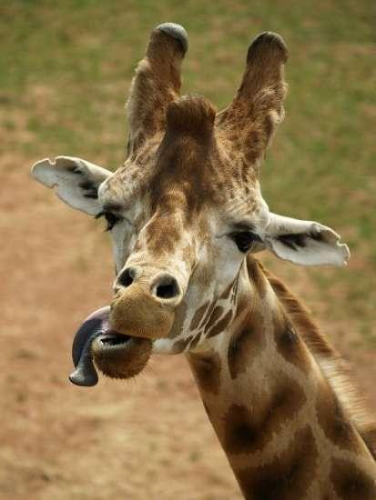 動物園貼出詭異照片問:「猜猜這是什麼?」 公布真相網友全嚇翻:幻滅了!