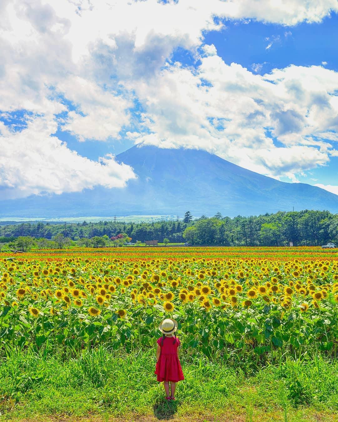 日本爸用「宮崎駿的方式」曬小孩 堅持「不拍正面」成果超夢幻爸媽都該學起來!