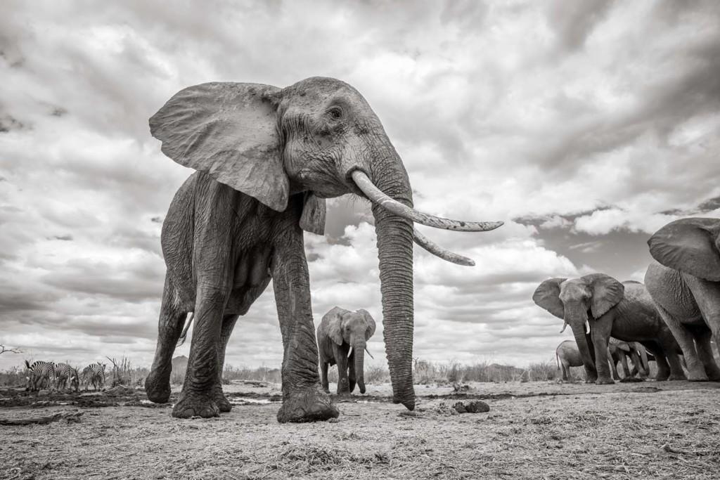 他花540天拍攝肯亞「象之女王」生前最後瞬間 「眾大象跟她道別畫面」讓你雞皮疙瘩QQ