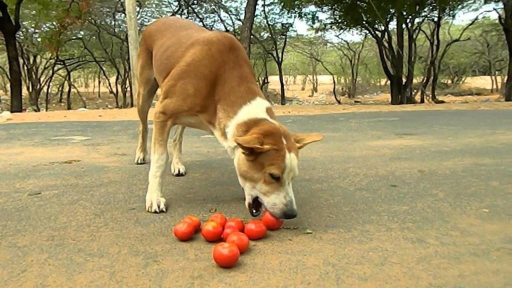 15個如果狗狗吃了「傷心難過的人就是你」的絕不能碰食物 連雞蛋也要特別注意!