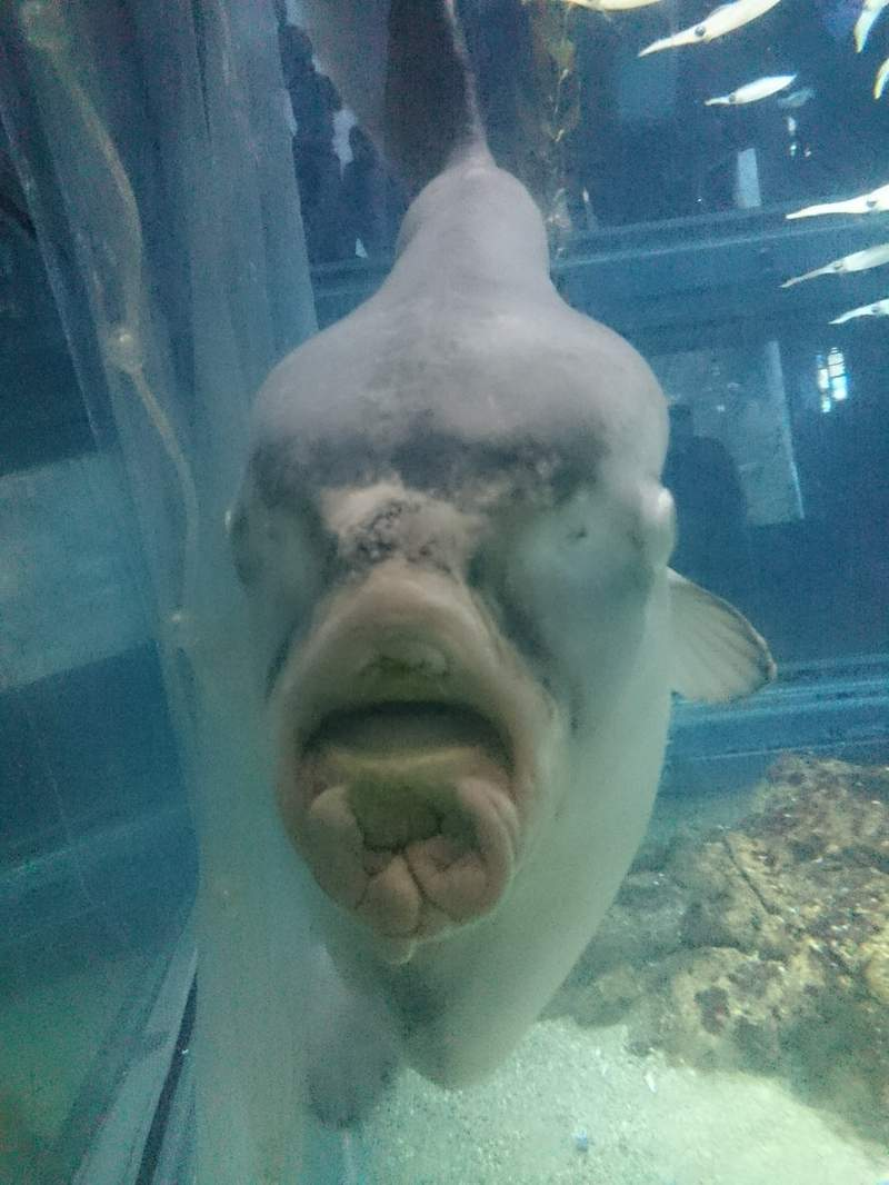 他在水族館意外拍到「翻車魚的正面」!網友一看卻嚇到爆哭:寧願不知道