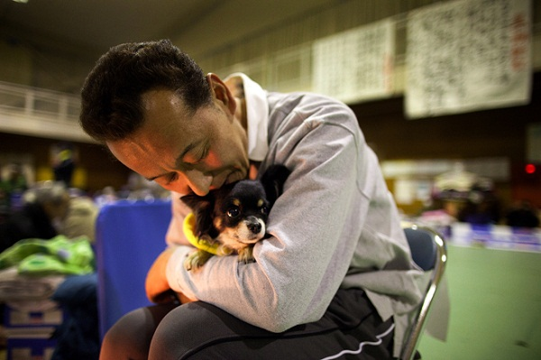 小黃狗避開主人「獨自前往另一個世界」 農夫夢見菩薩身邊兩條狗:他任務已結束