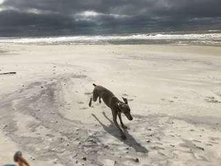 獨居女一出門「愛犬就發瘋」 某天回家發現「牠乖乖躺在別人腳邊」嚇傻:真的上當了!