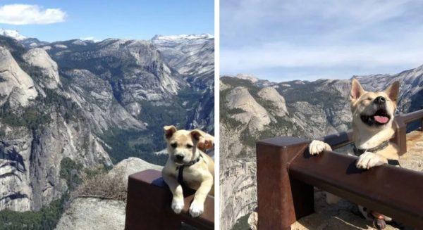 25個主人分享「小時候萌狗vs現在厭世老狗」的超可愛對比圖