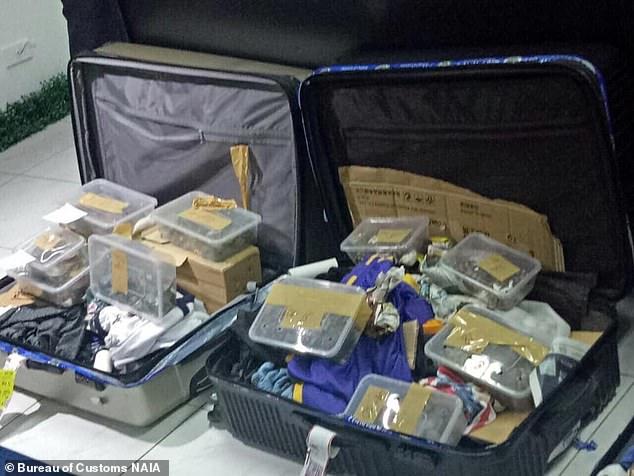 機場驚現「裝滿1500隻烏龜」的行李箱 主人消失警察也不敢動:有一隻要260萬...