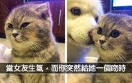14張「不幸被悲劇人類附身」的超爆笑動物 完美演繹「上班族悲哀」的貓皇!