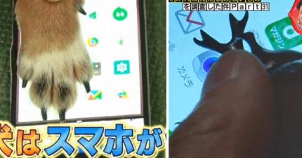 網問「動物能不能滑手機?」 他們請「6種活體」直接做實驗…網震驚:獨角仙竟然也可以!