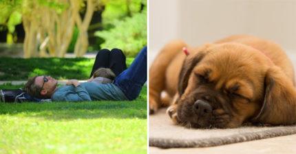 專家:「睡午覺」讓工作效率更高 每天「花6分鐘賺10小時」效果超驚人!