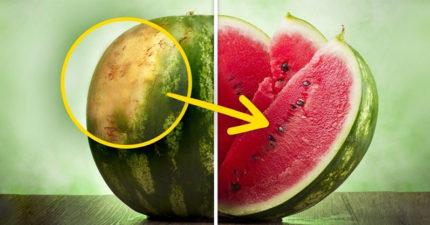 瓜農爆料5個「想挑美味西瓜必遵守」的獨家秘訣 「母的西瓜」比公的甜超多!