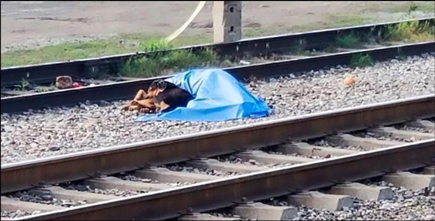 忠心狗緊抱「躺在鐵軌上的主人」不願離開 醫護士伸手「牠怒吼想保護」讓所有人鼻酸