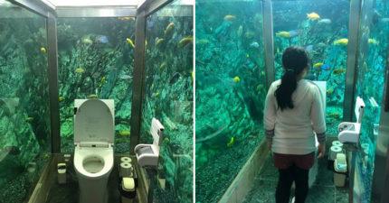 日咖啡廳砸800萬「讓顧客在海底上廁所」 海洋迷瘋狂朝聖「老闆卻超困擾」!