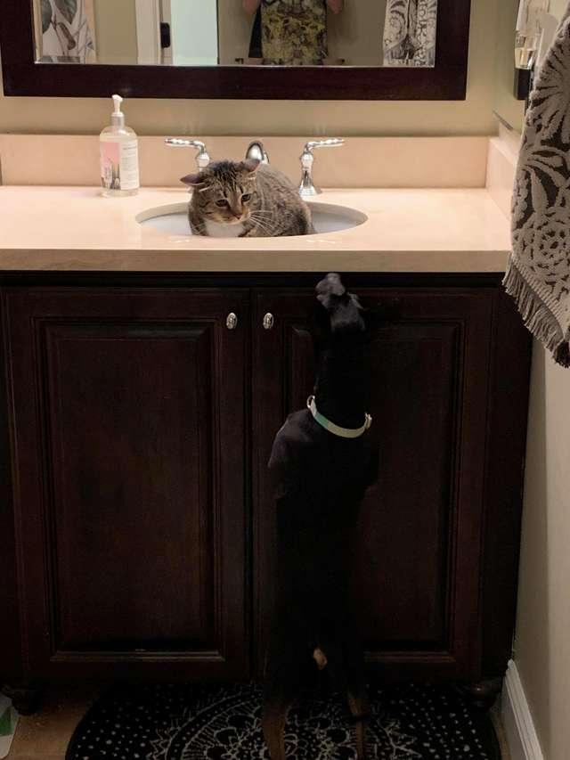 貓皇第一次看到「最可怕生物」嚇到快哭!直接開啟「水槽喵生」網笑翻:貓生已die臉