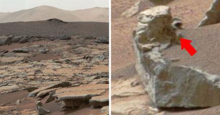 專家爆料「在火星上發現生物」 公布證據網友嚇壞:外星人從「南極偷走牠」?