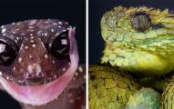 他拍下22張「讓你愛上爬蟲類」的最高清寫真 雙頭蛇的「鱗片紋路超完美」!