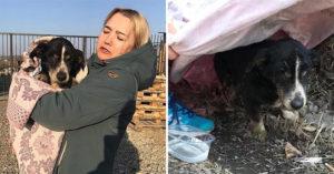 18歲愛犬「沒有呼吸」主人心碎辦後事 幾天後「牠從土裡爬回家」嚇哭所有人
